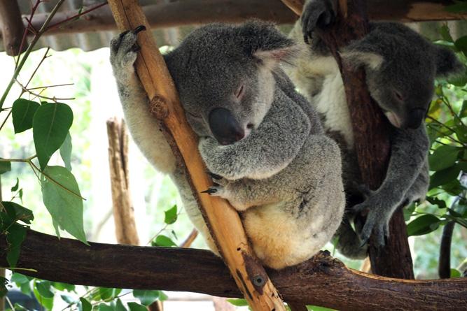 om-D e-m10 foto: koala