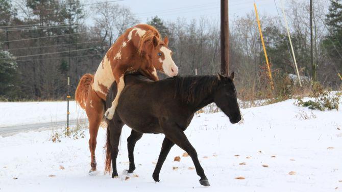 """Krijgt het ene paard een vuiltje in zijn oog, zegt de ander: """"kom, ik duw je wel naar huis!"""""""