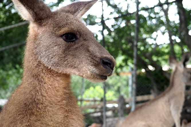Olympus OM-D E-M10 foto: kangaroe