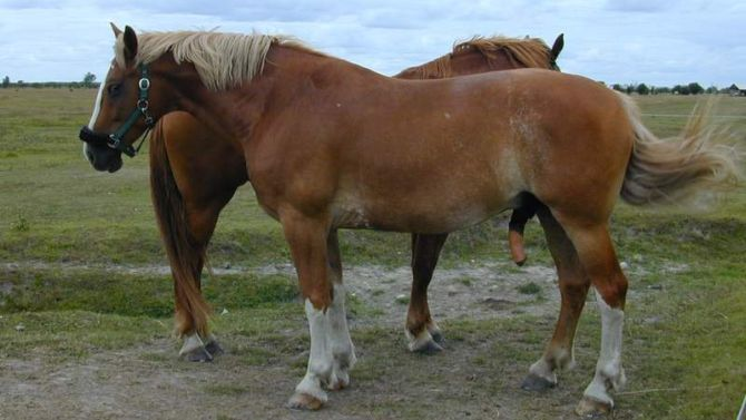 Een paard heeft geen poten, maar benen.